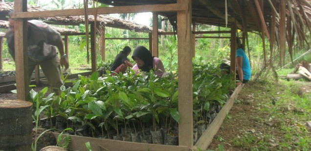 Sustaining nature, traditional knowledge and sound agriculture in Siberut Island, Indonesia